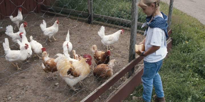 The Sanctuary That's Saving Farm Animals